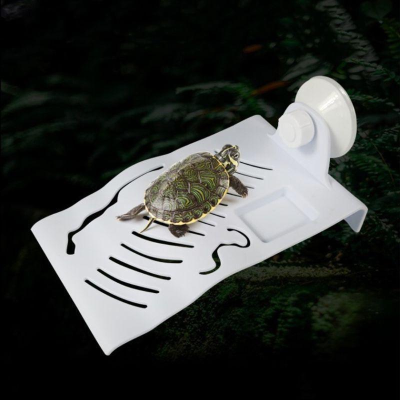 reptile bask terrace sun turtle font b
